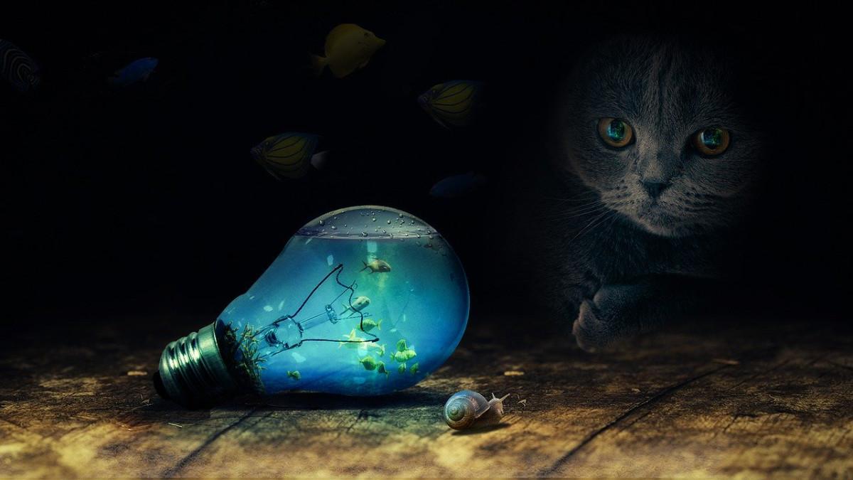 電球を見つめる猫