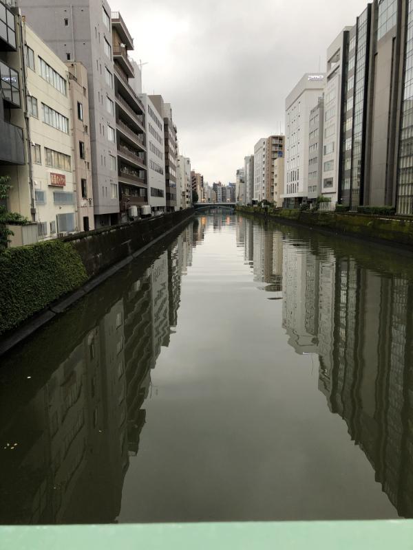 神田川と水鳥